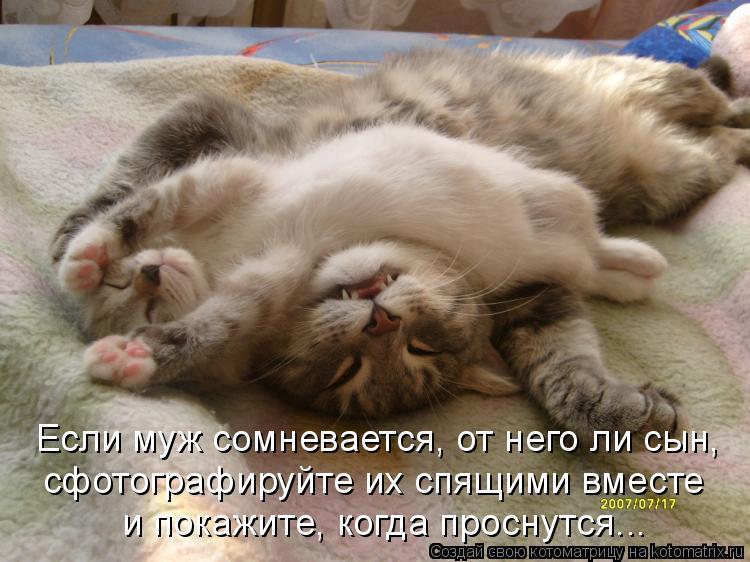 Котоматрица: Если муж сомневается, от него ли сын, сфотографируйте их спящими вместе и покажите, когда проснутся...