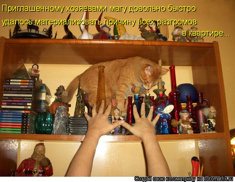 Котоматрица: Приглашенному хозяевами магу довольно быстро удалось материализовать причину всех разгромов в квартире...