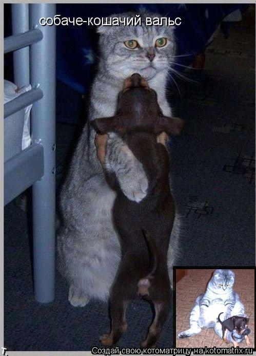 Котоматрица: собаче-кошачий вальс