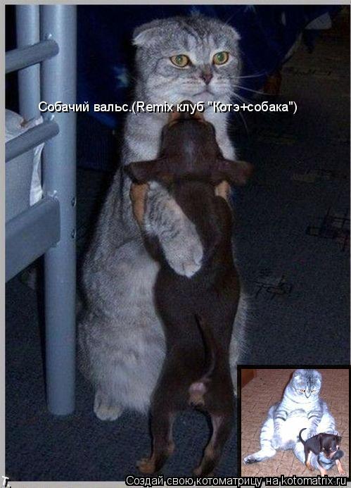 """Котоматрица: Собачий вальс.(Remix клуб """"Котэ+собака"""")"""