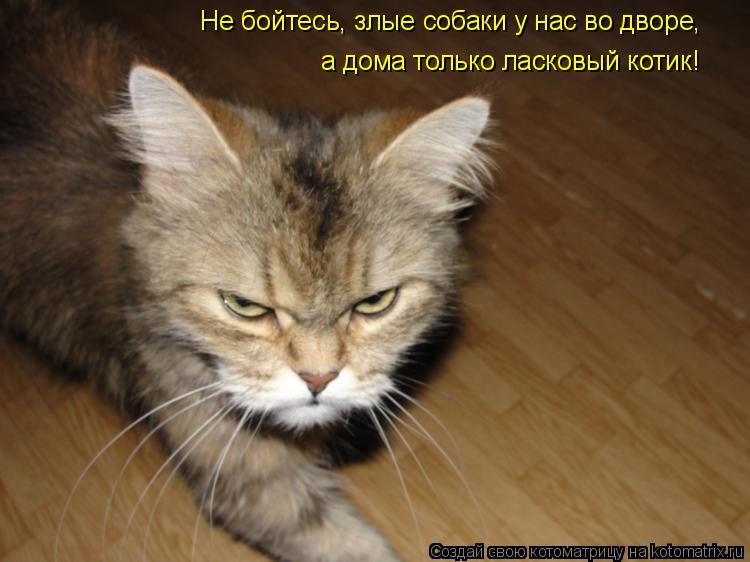 Котоматрица: Не бойтесь, злые собаки у нас во дворе, а дома только ласковый котик!