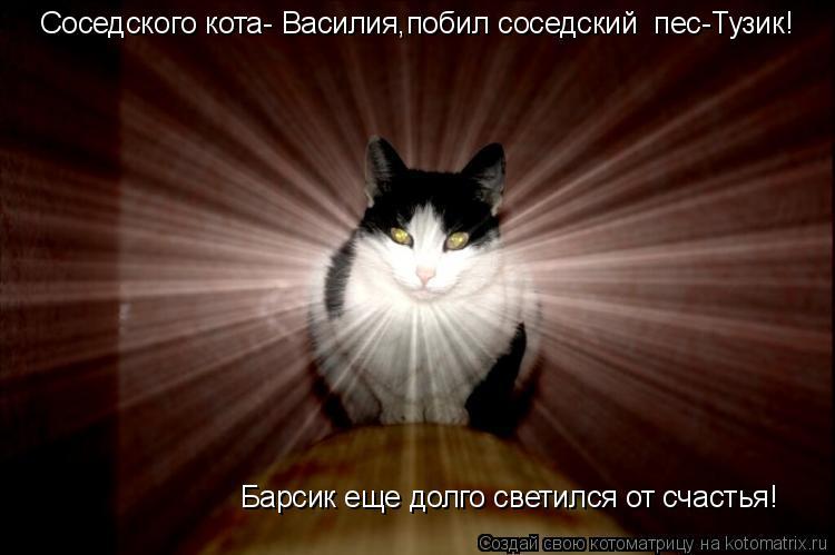 Котоматрица: Соседского кота- Василия,побил соседский  пес-Тузик! Барсик еще долго светился от счастья!