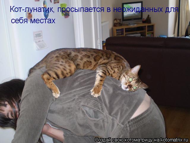 Кот-лунатик, просыпается в неожиданных для  себя местах