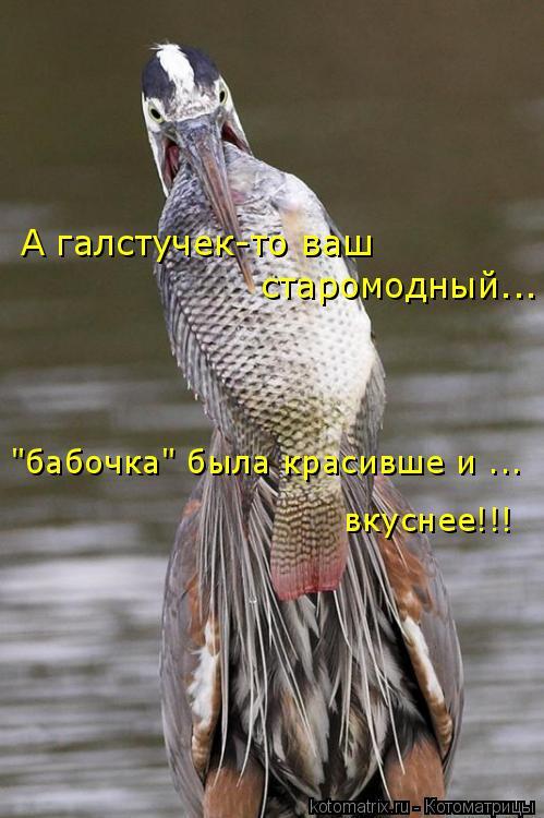"""Котоматрица: А галстучек-то ваш старомодный... """"бабочка"""" была красивше и ... вкуснее!!!"""