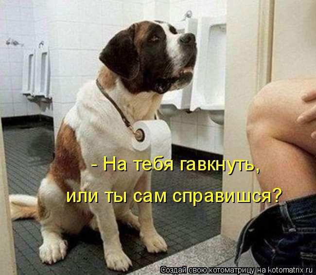 Котоматрица: - На тебя гавкнуть, или ты сам справишся?