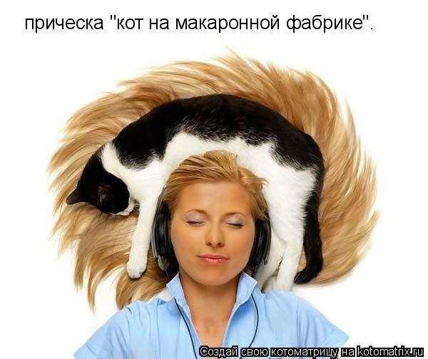 """Котоматрица: прическа """"кот на макаронной фабрике""""."""