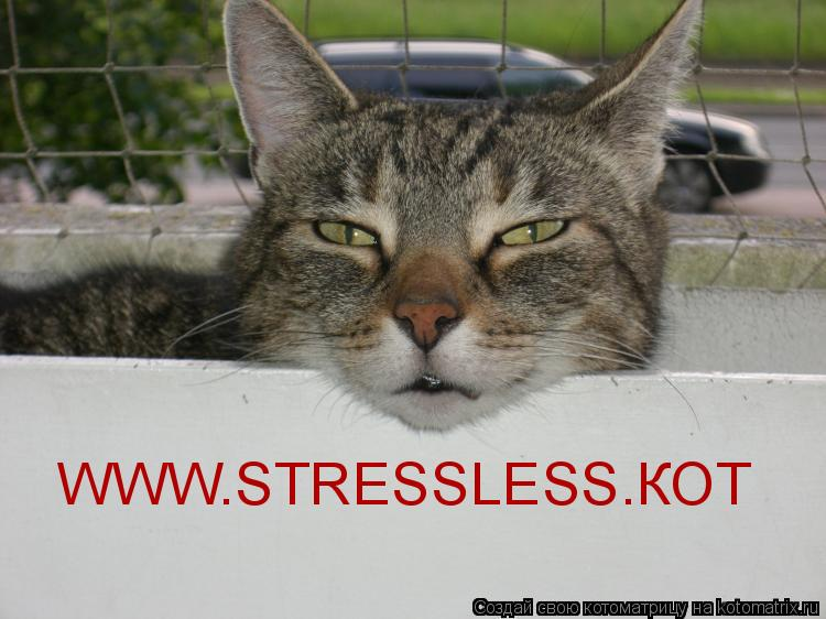 Котоматрица: WWW.STRESSLESS.КОТ