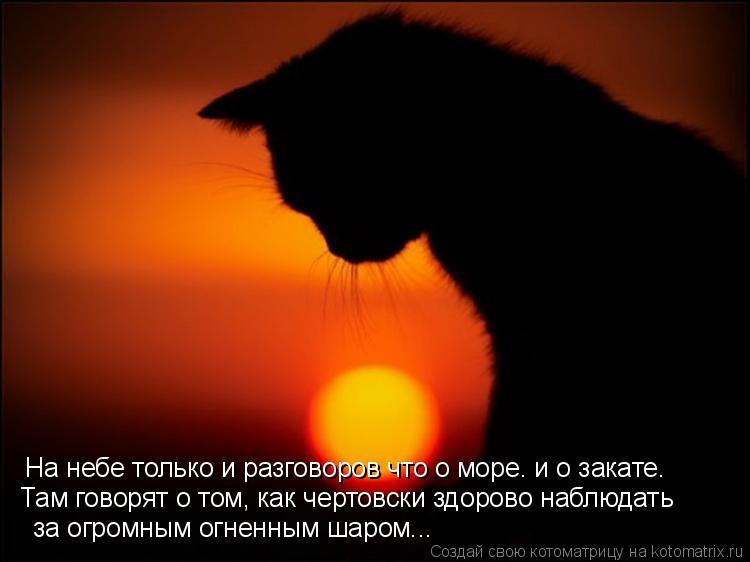 Котоматрица: На небе только и разговоров что о море… и о закате.  Там говорят о том, как чертовски здорово наблюдать   за огромным огненным шаром...