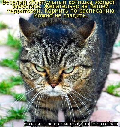 Котоматрица: Можно не гладить. Веселый обаятельный котишка желает завестись. Желательно на Вашей  территории. Кормить по расписанию.