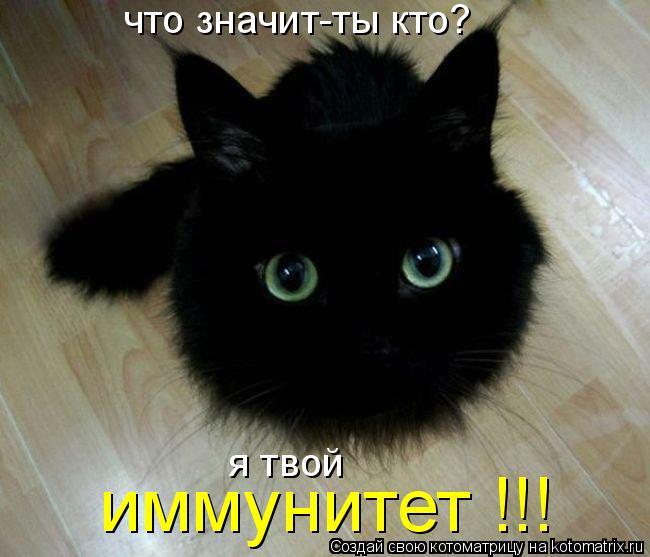 Котоматрица: что значит-ты кто? иммунитет !!! я твой