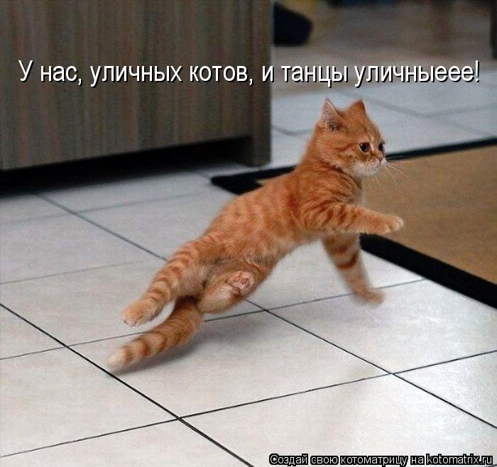 Котоматрица: У нас, уличных котов, и танцы уличныеее!