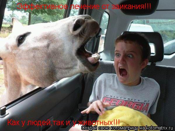 Котоматрица: Эффективное лечение от заикания!!! Как у людей,так и у животных!!!