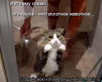Котоматрица: что кошка - чистоплотное животное... и кто ему сказал...