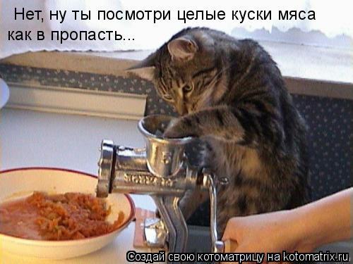 Котоматрица: Нет, ну ты посмотри целые куски мяса как в пропасть...
