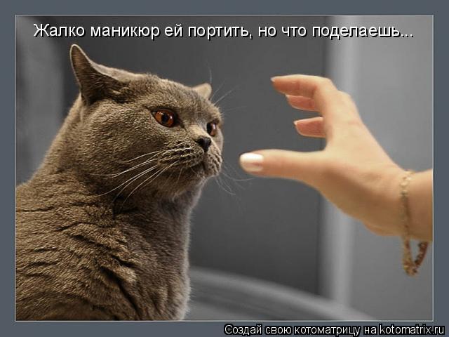 Котоматрица: Жалко маникюр ей портить, но что поделаешь...