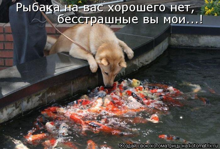 Рыбака на вас хорошего нет, бесстрашные вы мои...!