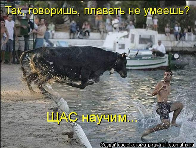 Котоматрица: Так, говоришь, плавать не умеешь?  ЩАС научим...