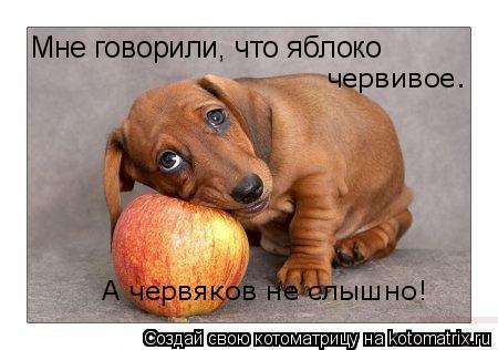 Котоматрица: Мне говорили, что яблоко червивое. А червяков не слышно!