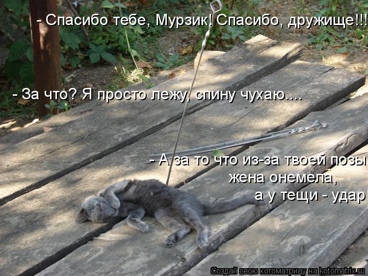 Котоматрица: - Спасибо тебе, Мурзик! Спасибо, дружище!!! - За что? Я просто лежу, спину чухаю.... - А за то что из-за твоей позы,  жена онемела,  а у тещи - удар!