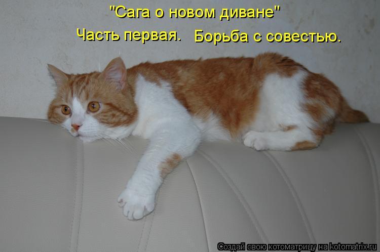 """Котоматрица: """"Сага о новом диване""""  Часть первая. Борьба с совестью."""