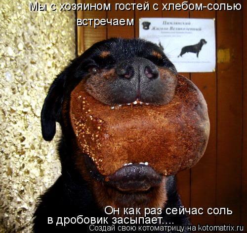 Котоматрица: Он как раз сейчас соль  в дробовик засыпает.... Мы с хозяином гостей с хлебом-солью встречаем