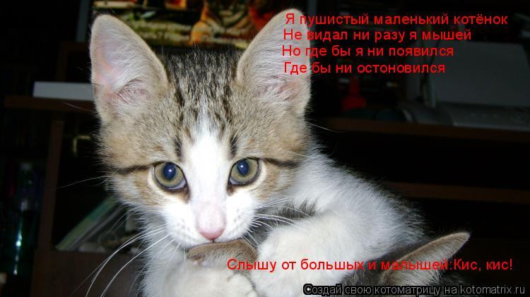 я пушистый маленький котенок не ловил ни разу я мышей слушать