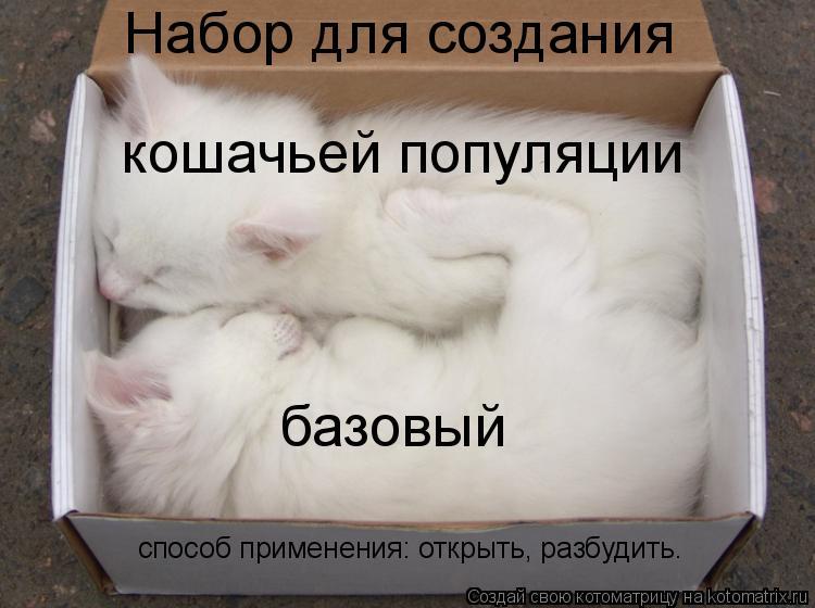 Набор для создания кошачьей популяции базовый способ применения: открыть, разбудить.