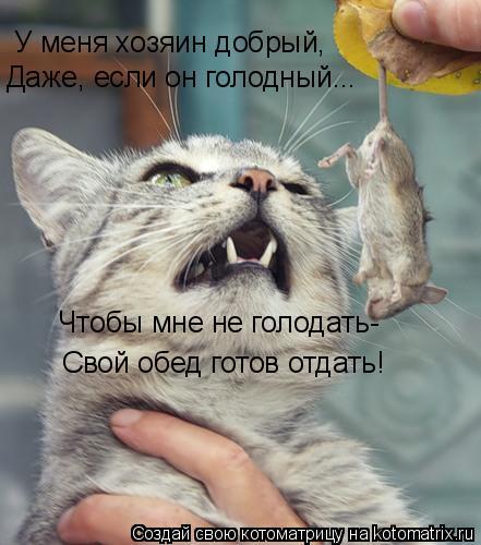 Котоматрица: У меня хозяин добрый, Даже, если он голодный... Чтобы мне не голодать- Свой обед готов отдать!