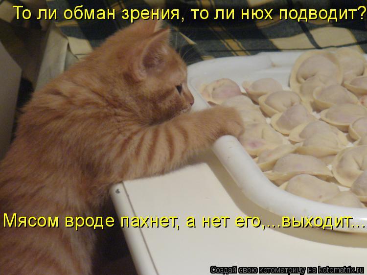 Котоматрица: То ли обман зрения, то ли нюх подводит? Мясом вроде пахнет, а нет его,...выходит...
