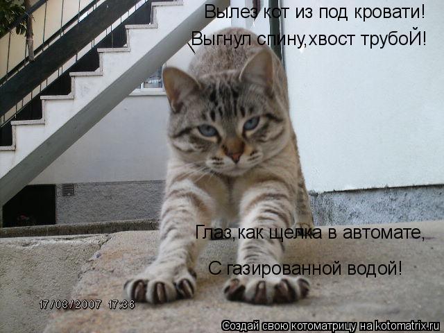 Котоматрица: Вылез кот из под кровати! Выгнул спину,хвост трубоЙ! Глаз,как щелка в автомате, С газированной водой!