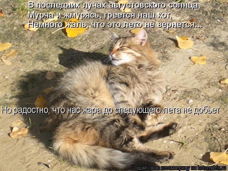 Котоматрица: В последних лучах августовского солнца, Мурча и жмурясь, греется наш кот, Немного жаль, что это лето не вернется... Но радостно, что нас жара д