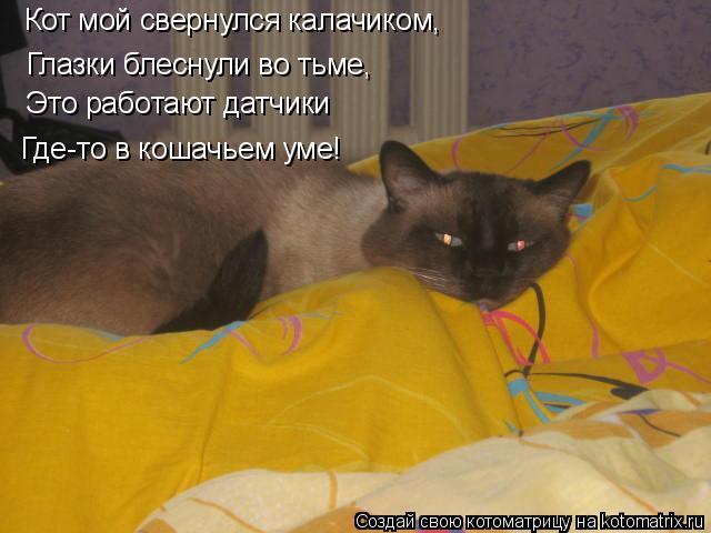 Котоматрица: Кот мой свернулся калачиком, Глазки блеснули во тьме, Это работают датчики Где-то в кошачьем уме!