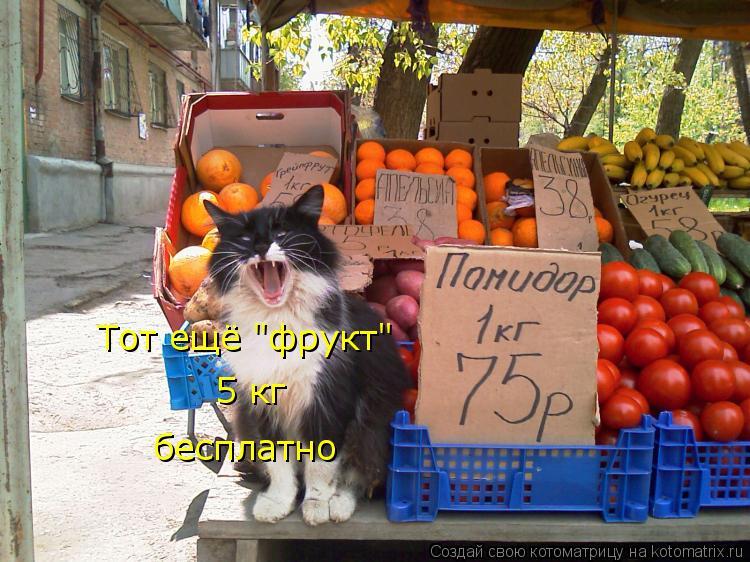 """Котоматрица: Тот ещё """"фрукт"""" 5 кг бесплатно"""