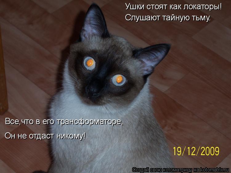 Котоматрица: Ушки стоят как локаторы! Слушают тайную тьму. Он не отдаст никому! Все,что в его трансформаторе,