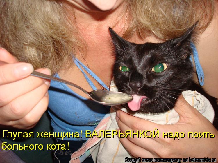 Котоматрица - Глупая женщина! ВАЛЕРЬЯНКОЙ надо поить больного кота!