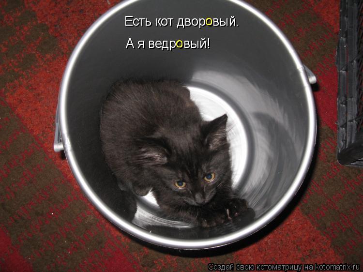 Котоматрица: А я ведровый! Есть кот дворовый. о о