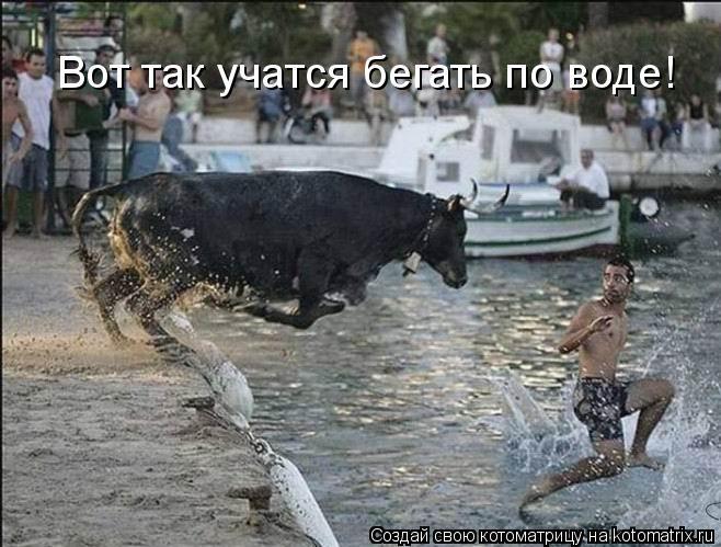 Котоматрица: Вот так учатся бегать по воде!