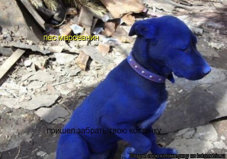 Котоматрица: пес марсеанин  пришел забрать твою косточку пес марсеанин