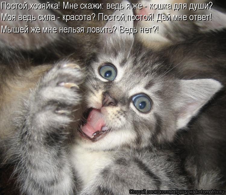 Котоматрица: Постой,хозяйка! Мне скажи: ведь я же - кошка для души? Моя ведь сила - красота? Постой,постой! Дай мне ответ! Мышей же мне нельзя ловить? Ведь не