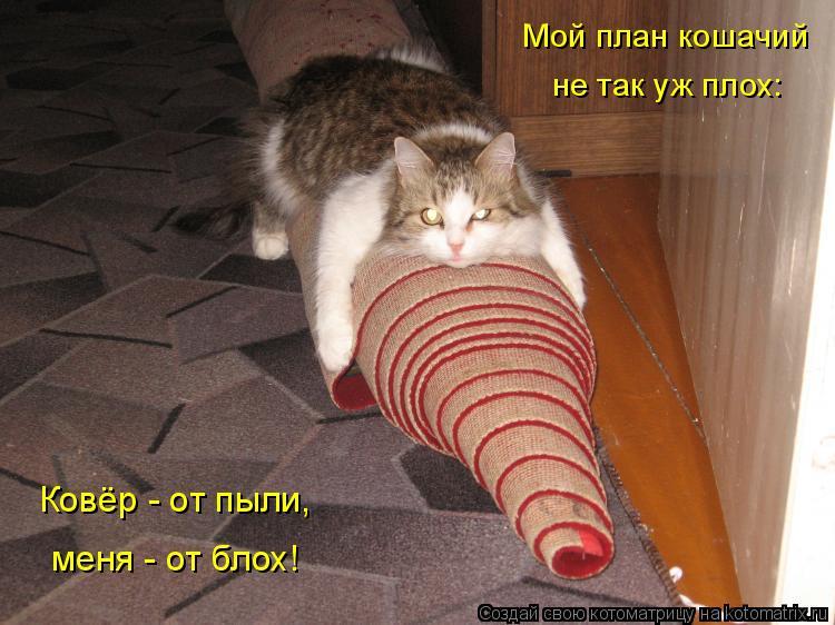 Котоматрица: Мой план кошачий не так уж плох: меня - от блох! Ковёр - от пыли,