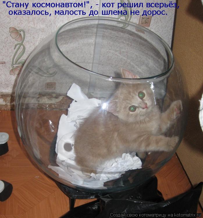"""Котоматрица: """"Стану космонавтом!"""", - кот решил всерьёз, """"Стану космонавтом!"""", - кот решил всерьёз, оказалось, малость до шлема не дорос."""