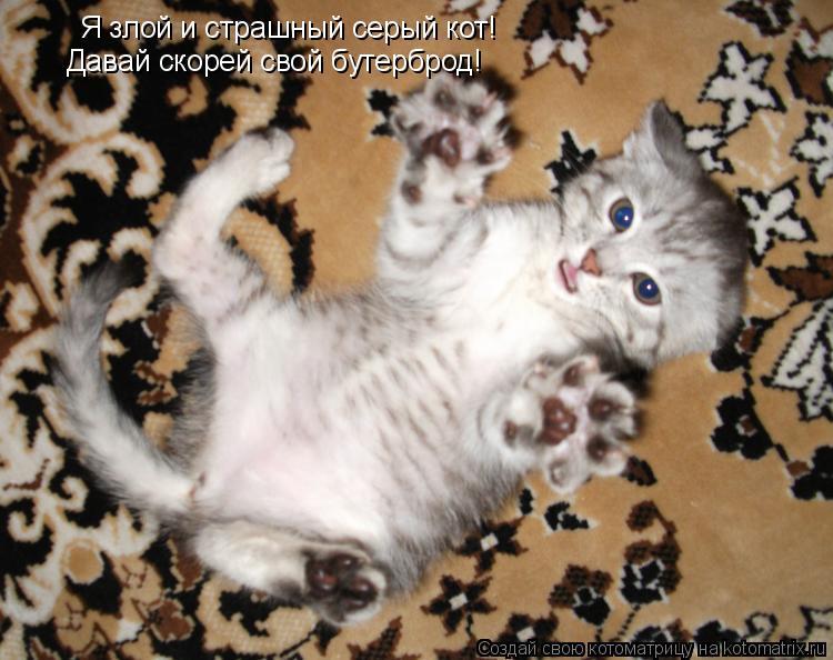 Котоматрица: Я злой и страшный серый кот! Давай скорей свой бутерброд!