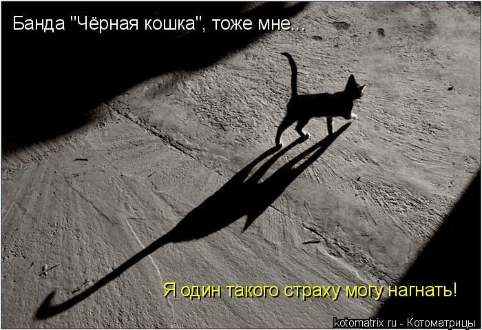 """Котоматрица: Банда """"Чёрная кошка"""", тоже мне... Я один такого страху могу нагнать!"""
