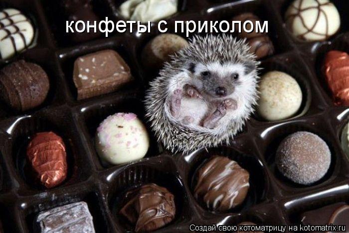 Котоматрица: конфеты с приколом