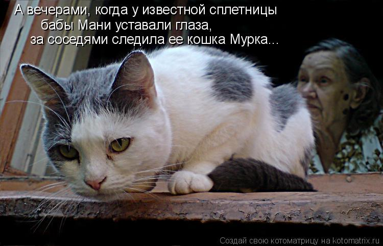 Котоматрица: бабы Мани уставали глаза,  за соседями следила ее кошка Мурка... А вечерами, когда у известной сплетницы