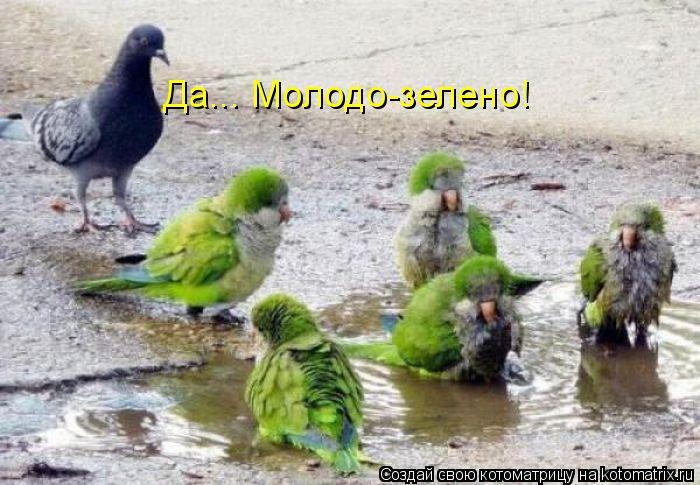 Котоматрица: Да... Молодо-зелено!