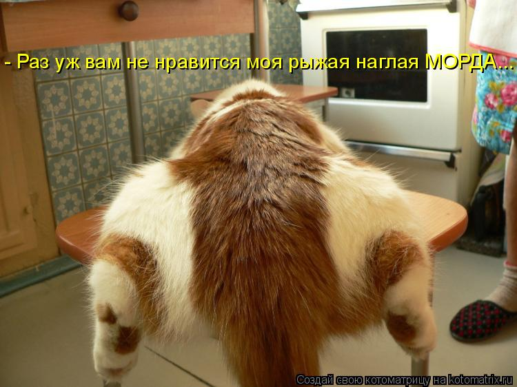 Котоматрица: - Раз уж вам не нравится моя рыжая наглая МОРДА...