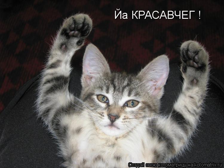 Котоматрица: Йа КРАСАВЧЕГ !