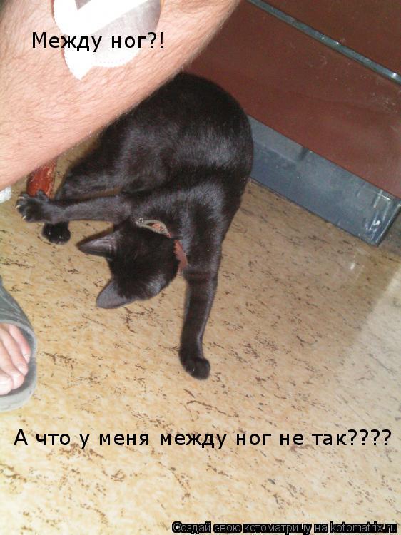 u-menya-mezhdu-nozhek-foto