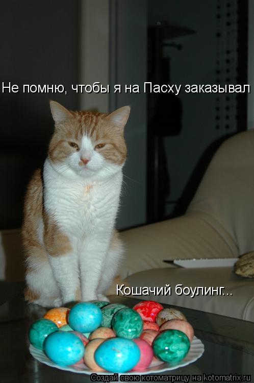 Котоматрица: Не помню, чтобы я на Пасху заказывал Кошачий боулинг...